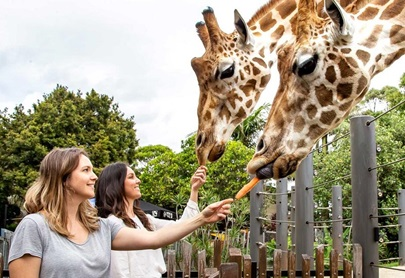 Movement at Taronga Zoo slow to pick-up since June 1 opening